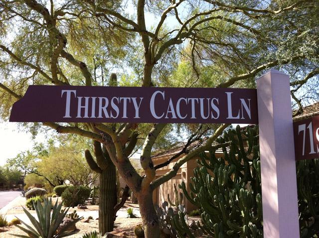 Thirsty Cactus Lane | Terravita | Scottsdale